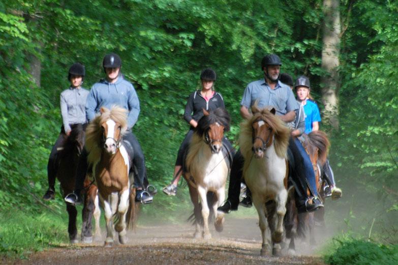 turridning østjylland, teambuilding med heste