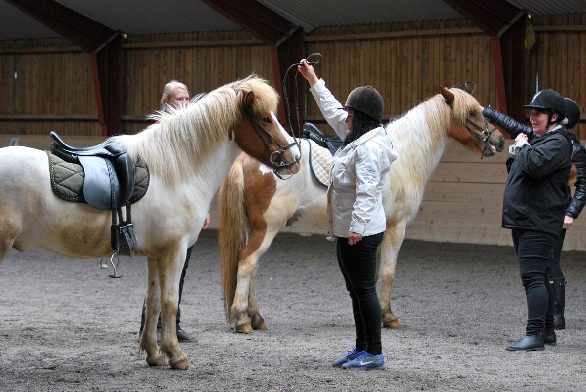 teambuilding med heste